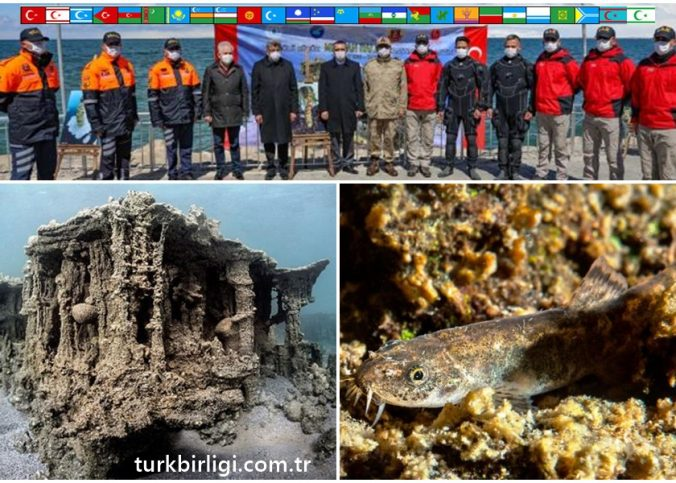 Van Gölü'nde yeni bir tür olan 'Küçük mercan' balığı keşfedildi